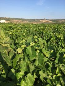 Incoming International Wine Traders Sicilia Giugno 2015